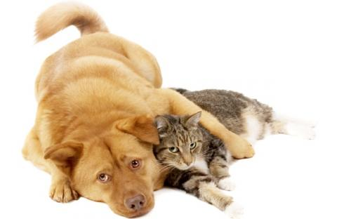 Tampa Pet Allergies, Tampa Pet Allergist, Dog Food Allergies, Dog Environmental Allergies, Flea Allergies in Florida, Cat Food Allergies, Cat Allergist, Dog Allergist