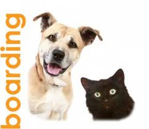 Tampa Pet Boarding, Tampa Dog Boarding, Tampa Cat Boarding, Tampa Veterinarian Boarding